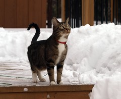 Yet More Snow! (Tabby Fan) Tags: cc100