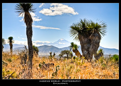 Citlaltpetl (Hagens_world) Tags: sky plants mountain plant mountains tree latinamerica nature berg mxico landscape volcano flickr forsale natur pflanze pflanzen himmel selection natura paisaje palm cielo latin stockphotos rbol montaa landschaft bume palme baum hdr highdynamicrange mexiko vulkan amricalatina volcn stockphotography amriquelatine lateinamerika latinoamrica mittelamerika picodeorizaba citlaltpetl bildagentur hagensworld hagensworldphotography 2009mexicoxmas nutzungshonorar askforcommercialuse kommerziellenutzung