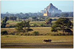 """An ox cart, a couple of small temples & the 'bad luck' temple"" 