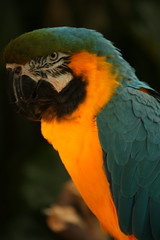 IMG_4862 (Kelsey Zachary) Tags: flowers plants abstract texture birds bokeh feathers parrot exotic tropical colourful brilliant parrots