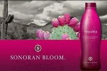 Nopalea Trivita SonoranBloom Wellness Challenge Sonoran Bloom Cactus Drink Review Testimonials pic13