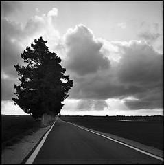on the road (Ivan Calabrese) Tags: sunset blackandwhite bw 120 6x6 film clouds rolleiflex mediumformat square landscapes kodak trix bn rodinal 35 ontheroad planar ivancalabrese