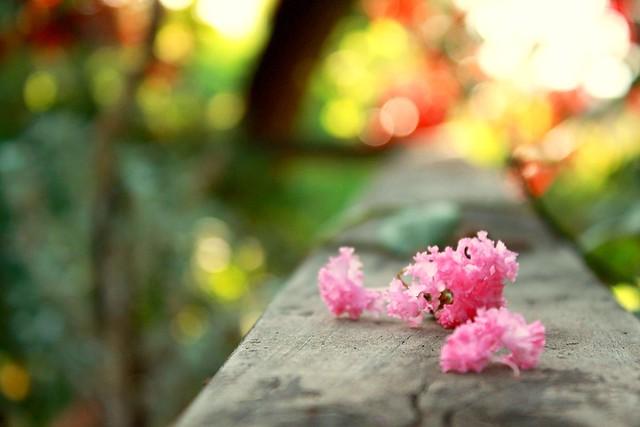 10/52 Y por acá ya se caen las flores...