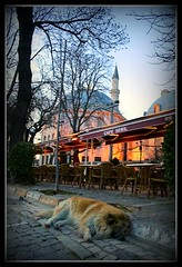 """73/365 """"Dogs and Mosques in Istanbul"""" (Bridget Davey (www.bridgetdavey.com)) Tags: dogs canon photography march asia europe beds minaret praying bedfordshire istanbul ayasophia sleepingdog streetdogs moschee 2011 project365 konstantinopel hagiasopia strassenhunde bridgetdavey bridgetdaveyphotography photographerinleightonbuzzard 14thmarch2011 14032011 streetdogsinistanbul strassenhundeinistanbul"""