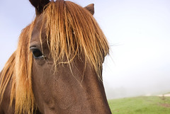 horse (subjectivexperience) Tags: uk morning horse animal fog wildlife foggy meadow pony oxford mustang steed colt stallion racehorse equine workhorse filly foal foggymorning galloper gelding