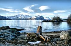 I  Norway! (larigan.) Tags: winter snow mountains beach beauty sunshine norway emblem rocks scenic serenity fjord treestump sunnmrsalpene norwegiansea larigan phamilton emblemssanden gettyimagesnorwayq1 emleim emblemsanden emlemsvgen licensedwithgettyimages