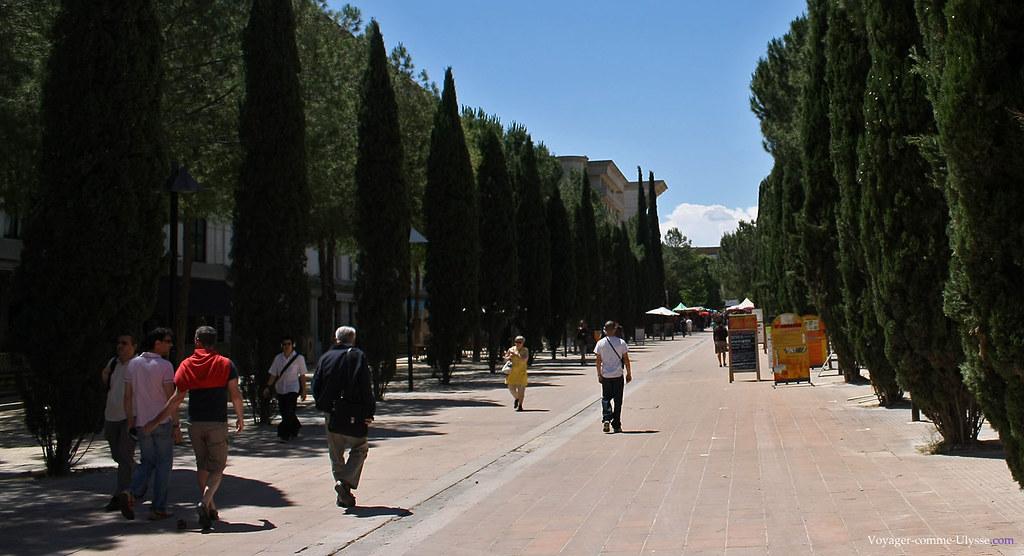 De belles perspectives, le long de la Place du Millénaire, bordée d'arbres