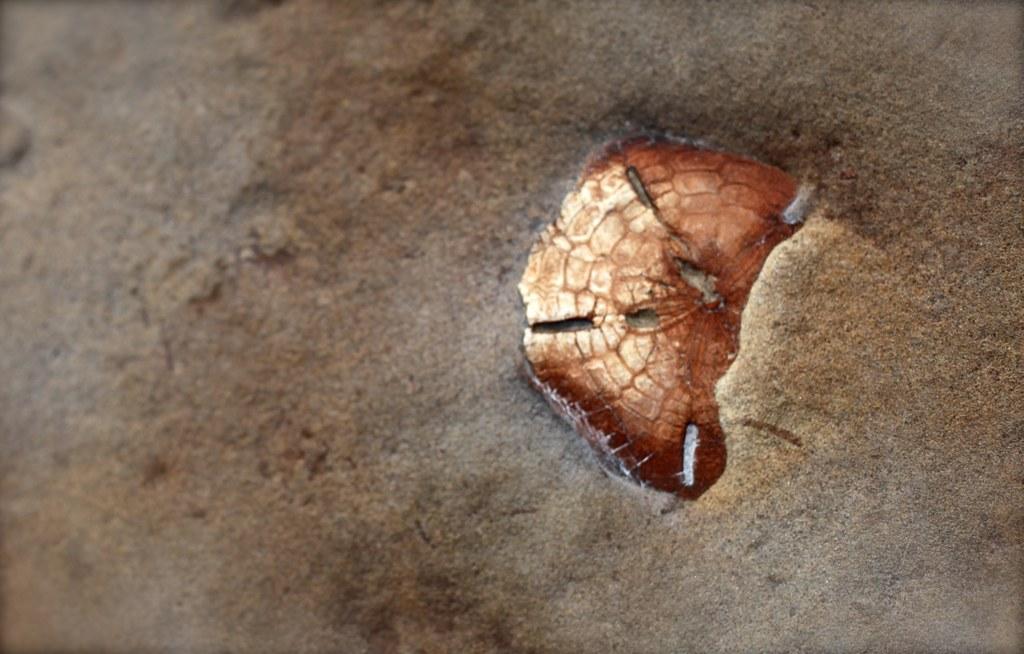 Yeliu fossil