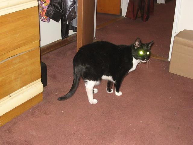 Laser Datsa