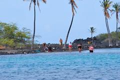DSC_0818 (SeussMD) Tags: ocean travel sunset fish flower coffee hawaii spider kayak snorkel bigisland ahi kona maunakea