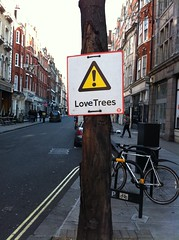 Warning - Love Trees