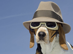 Simply cool (Paguma / Darren) Tags: blue sky dog hat goggles hound floyd doggles