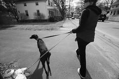 _MG_6694-105 (k.a. gilbert) Tags: street bw dog pet greyhound dogs animals walking outside outdoors walk alice naturallight canine schnauzer sidewalk kristen wife handheld vivian leash fullframe milf manualfocus 116 uwa tokina1116mmf28 hoyahdcpl canon5dc