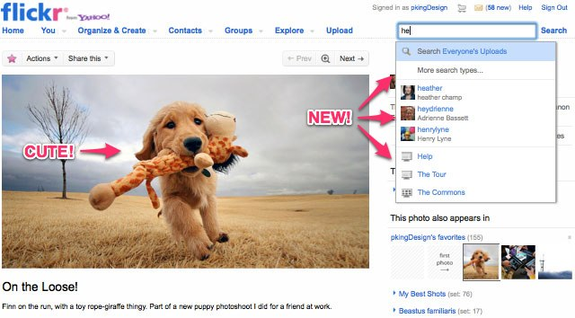Flickr's new Search Box