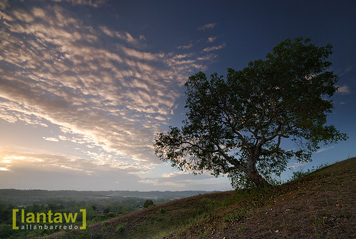 Mayantoc Sunrise Lone Tree