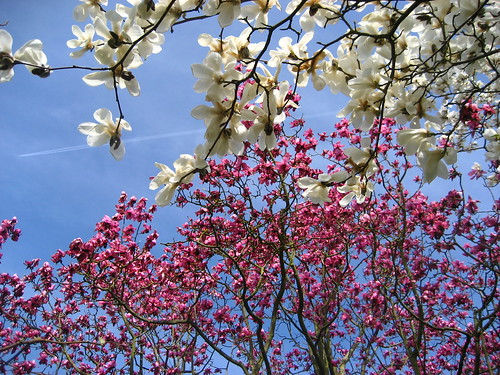 Two tone blossom