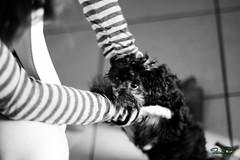 Mimi - Quero Mais carinho -1 (A melhor imagem) Tags: brazil dog black branco brasil canon eos is carinho preto e cachorro fortaleza cear 7d 28 mm usm 135 55 35 wight pedinte cadela brsil