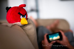 Angry+Bird+Coaching