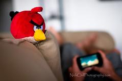 Angry Bird Coaching