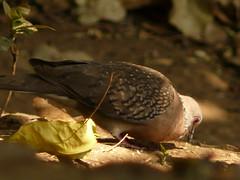 P1150762 (babsybou) Tags: travel india birds silent watching kerala du valley yatra sud inde attapadi birdswatching babsybou malleeshwaramjunglelodge pettickal