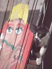 Gatiarte (estrellitafugaz) Tags: animal gata mascota gatita artcat