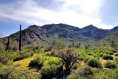 _DSC0020e ~ Sonoran Desert  (BDC Photography) Tags: buckeye arizona tamronda09bayonetlenshood nikon67mmcircularpolarizeriifilter tamronaf1750mmf28xrdiiildasphericaliflens nikondslrcamera nikon nikond200 sonorandesert naturebynikon