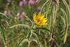 last summer moments this year (Janne Fairy) Tags: yellow flower blume gelb wildpflanze wildblume gräser pflanze pflanzen wild plant