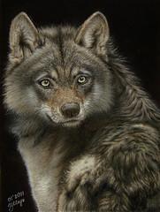 Fierce?  Wolf. (irishishka) Tags: wild art face look animal painting nose eyes furry wolf drawing pastel gray