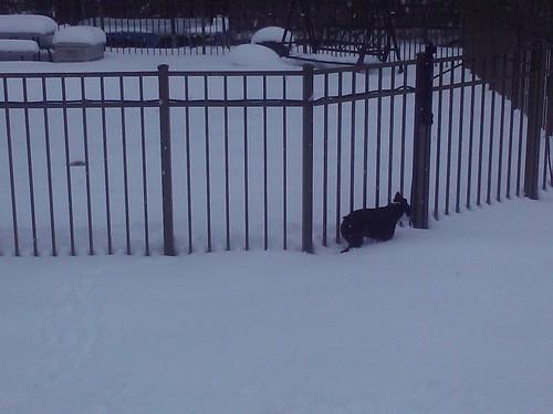 Bandit's in snow!
