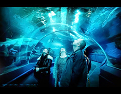 Beam me up Scotty (Lee Carus) Tags: ocean blue light people fish me water up shark ray tank candid wildlife sony sting tunnel beam planet rays alpha scotty manta slt a55