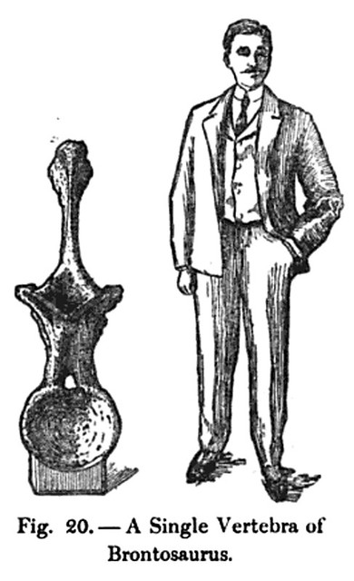 Gentleman and Vertebra