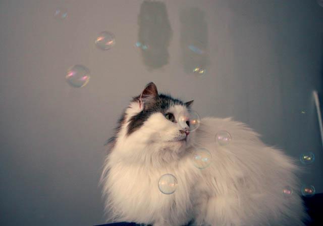 lou lou bubbles f
