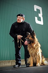 MOD Guard Service Dog Handler (Defence Images) Tags: uk dog animal army mod military guard free security service british defense handler defence ministryofdefence middlewallop