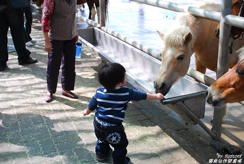 餵馬(3)