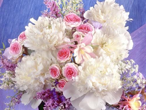 hd flower wallpaper free new flower wallpaper, Natural flower