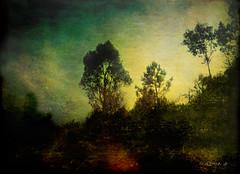 Eucalyptus ..... (tan.solo_milenia .) Tags: galicia eucalyptus artistictreasurechest daarklands