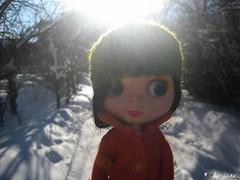 The winter cold sun