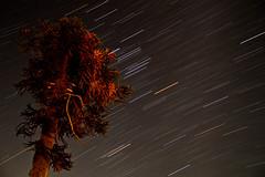 Icalma (Rodrigo Preuss) Tags: night stars estrellas araucaria startrails icalma movimientodeestrellas