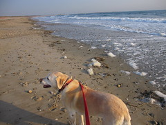 Winter beach, with dog