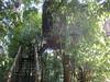 tree house, stream vally (travellersai) Tags: wild kerala boating wayanad bandipur vythri banasuradam streamvalleyresorts