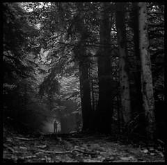 Half a world away (pavlov's.daughter) Tags: silhouette forest woods path poland polska beskidzywiecki