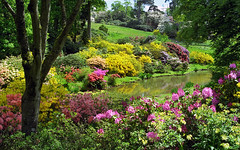 Leonardslee Gardens, West Sussex, UK | Kaleidoscopic colors of flowering azaleas near lake (17 of 19)