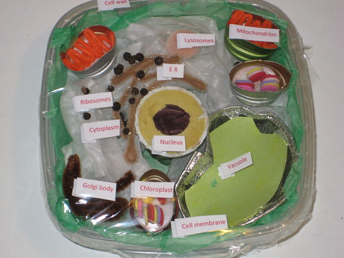 3D Plant Cell model Cake http://poppyprintcreates.blogspot.com/2011_02_01_archive.html