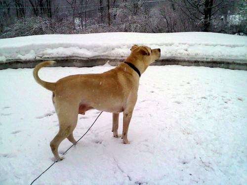 Zeus_snow_22511