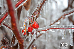 Covered in ice - frozen in time (Jeff Meeker) Tags: winter red cherries icestorm southwestmichigan canonxsi february2011 12inchice