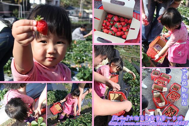 2011.02.27 大湖草莓塞塞塞一日遊-4