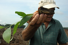 DSC_0497 (mitrataj) Tags: paper sumatra indonesia april redd acacia papermill deforestation riau pulpwood riauandalanpulppaper