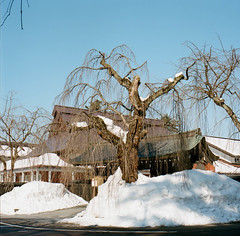 Tohoku #9 (kirschbrunnen) Tags: blue winter sky hasselblad 雪 冬 akita 秋田 tohoku kakunodate kodakportra400 ハッセルブラッド 武家屋敷 角館 503cx 枝垂れ桜 samuraihouse droopingcherry
