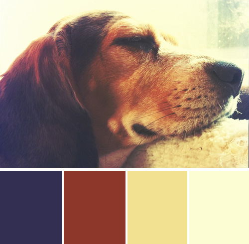color-palette-blog-beagles-lucy