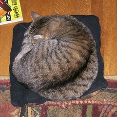 Another Mavis-shaped cat cushion